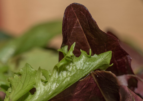 Is Lettuce Paleo?