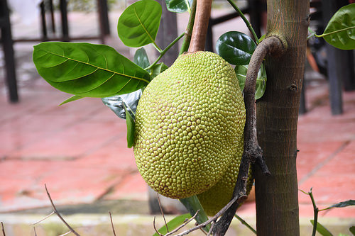 is jackfruit paleo